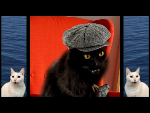 Cats Sing Baby Shark | Animal Songs | Cats Version