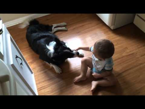 Cute Baby Plays With Gentle Beautiful Dog – Sweet Baby and Dog Video