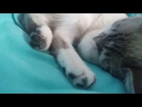 1 hr Sleeping Cat