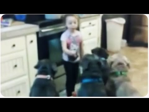 Little Girl Controls Pit Bull Dogs   Future Dog Trainer