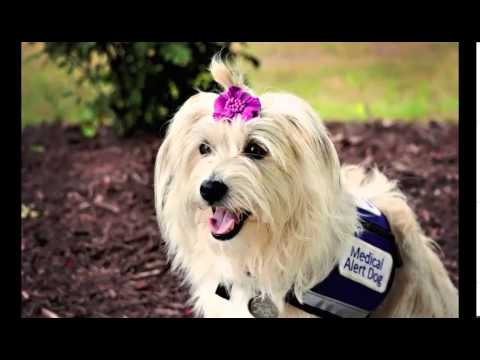 2014 American Humane Association Hero Dog Awards - Service Dog Category - JJ Krawczyk