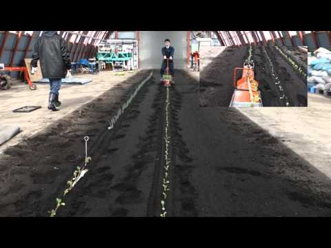 How to use transplanter