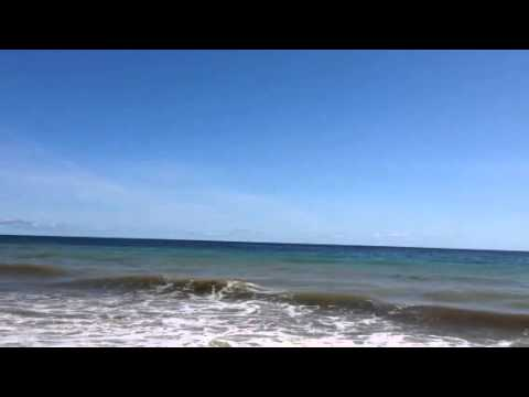 Race Point Beach Shark