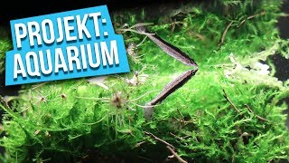 Ganz schön SCHRÄG! - Projekt: Aquarium