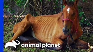 Emaciated Horse Rescued In Time To Save Her Life | Animal Cops Houston