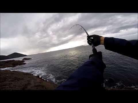Shore Casting Longtail Tuna (105cm)