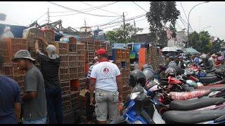 Video GT-HB #4 Harga Burung Kicauan Di Pasar Burung Jatinegara Jakarta, Harga Yang Aneh !!! download MP3, 3GP, MP4, WEBM, AVI, FLV Oktober 2017