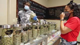 Mellow Mountain Manager, Antonio Fortune, Explains Why You Should Shop Mellow Mountain Dispensary