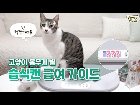 [팬시한 집사되기] 고양이 체중별 습식 사료 급여 가이드