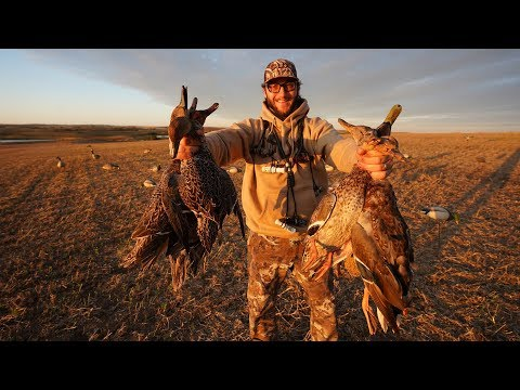 MALLARDS AND PINTAILS AT 10 YARDS!! Alberta Duck Hunting 2019