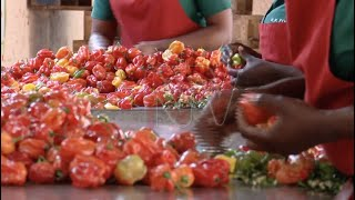 ORGANIC AGRICULTURAL EXPORTS: Targeting $100m in next three years