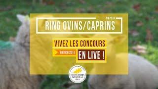 Ring Ovins et Caprins  - 26.02.2018