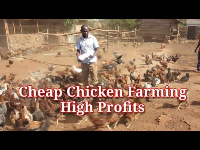 Cheap Chicken Rural Farming and high Profits. HOW TO START KIENYEJI CHICKEN FARMING