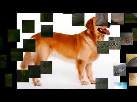 Dạy bé về các loài vật qua hình ảnh và tiếng việt p1