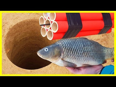 EXPERIMENT XXXL FIRECRACKER UNDERGROUND VS FISH