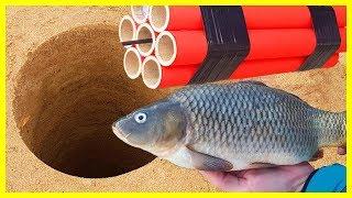 EXPERIMENT XXXL FIRECRACKER UNDERGROUND VS FISH thumbnail