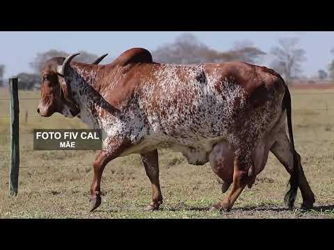 LOTE 09   PASSIFLORA FIV CAL   CAL 13674