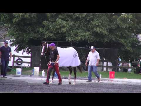California Chrome Morning Workout