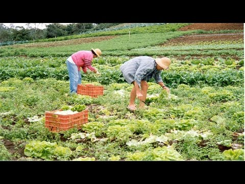 Curso Cultivo Orgânico de Hortaliças - Sistemas de Produção