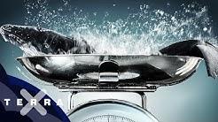 Wie wiegt man einen Wal? | Dirk Steffens