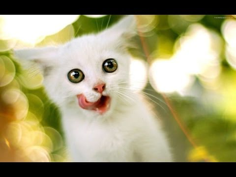 Хабаровск. Канадский сфинкс. 25 000 р. Котенок канадского сфинкса, 17:53, сегодня 13. Владивосток. Канадский сфинкс. 15 000 р. Канадский сфинкс, 17: 44, сегодня 316. Владивосток. Шотландская вислоухая кошка. Вислоухий мальчик, серебристый вискас, возраст 4 мес, 16:07, сегодня 3209. Владивосток.