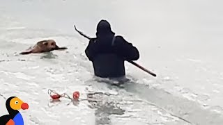 Dog That Falls Through Ice Rescued by Brave Man | The Dodo
