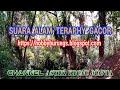 Suara Alam Teraphy Gacor  Mp3 - Mp4 Download