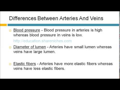 Differences Between Arteries And Veins | Tansport - YouTube