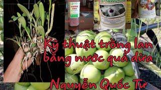 Trồng Phong Lan Bằng Nước Dừa Tươi Và Nấm Trichodema