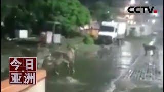 [今日亚洲]速览 惊现!群狮漫步印度街头 雨夜出没觅食| CCTV中文国际