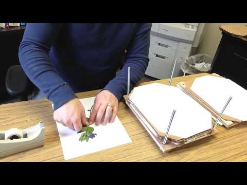How To Make A Simple Herbarium Mount