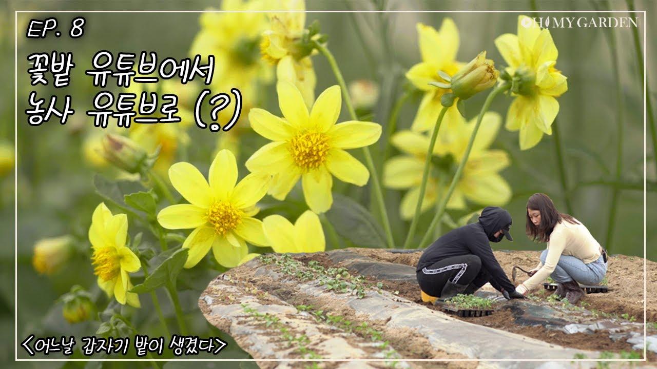 [어느날 갑자기 밭이 생겼다] Ep.8 꽃밭 유튜브에서 농사 유튜브로(???)
