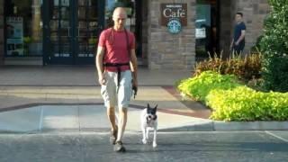Sprite - Decker Terrier Offleash   Redeeming Dogs   Tod Mcvicker Highland Village Dog Training
