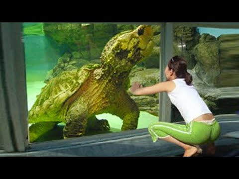 15 Turtles You Won't Believe Actually Exist