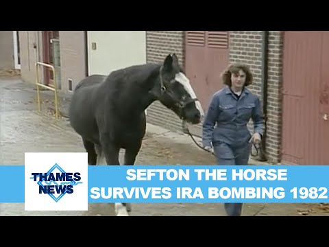 Sefton the Horse Survives IRA bombing 1982 | Thames News