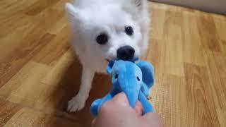 신상 장난감 코끼리 인형 3분컷  끼리야~~잘가