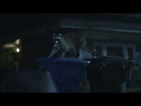 Raccoon-Geico-Common Sense