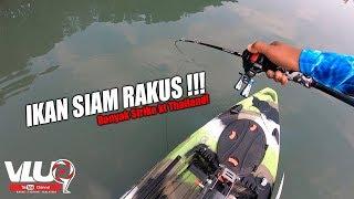Ikan SIAM RAKUS!! - VLUQ#96 - Thailand Trip Part 2 - Kayak Fishing