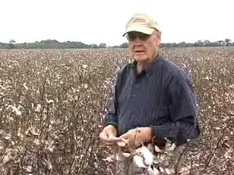 Louisiana Farm Bureau: Cotton Harvest Delay