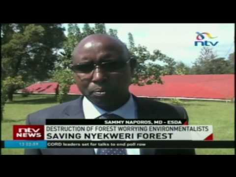 Destruction of Nyekweri forest worrying environmentalists