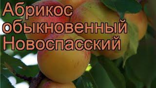 Абрикос обыкновенный Новоспасский (novospasskiy) 🌿 обзор: как сажать, саженцы абрикоса Новоспасский