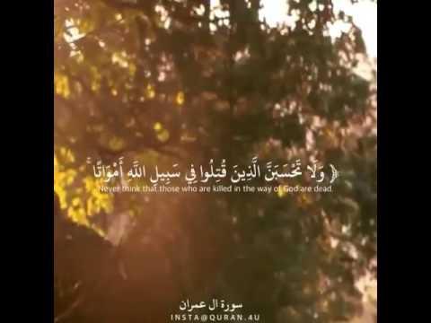 ولا تحسبن الذين قتلوا في سبيل الله أمواتا بل أحياء