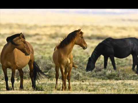 Wild Horses - Rolling Stones Cover - Barry Gonen