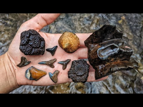 We Found A Mastodon Tooth, Megalodon Shark Teeth, And Glyptodont Fossils In A Florida Creek!