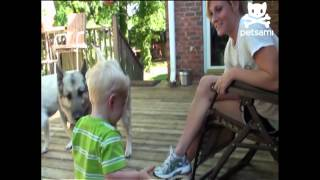 Video Big dog bulldozes boy download MP3, 3GP, MP4, WEBM, AVI, FLV Juli 2018