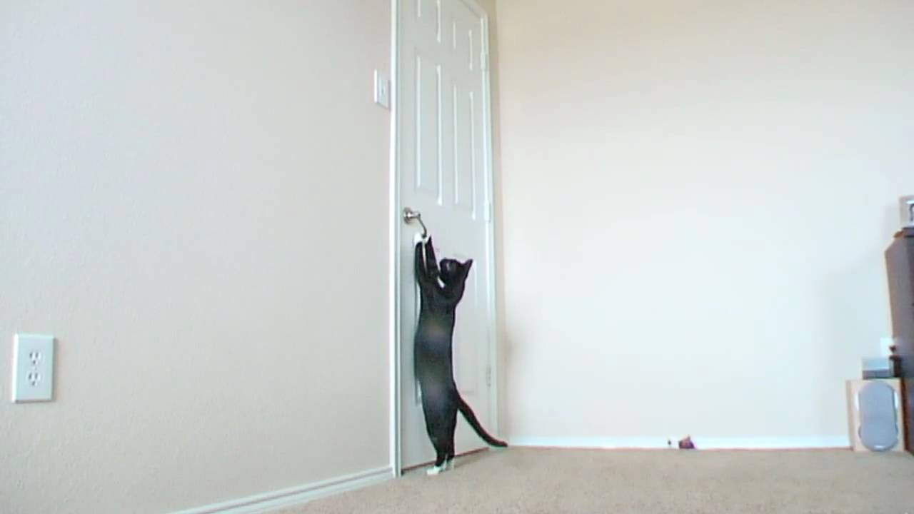 & Cat opens door - YouTube Pezcame.Com