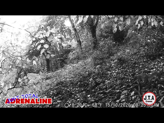 Squirrel near Hawick - Dawn Video Infrared HD Wildlife Camera clip - by JTAPromos www.JTAPromos.net