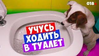 DOGVLOG: Умная Собака ходит в туалет в унитаз. Пранк с ЛОКИ БОБО. Говорящая собака  🐾 018 серия