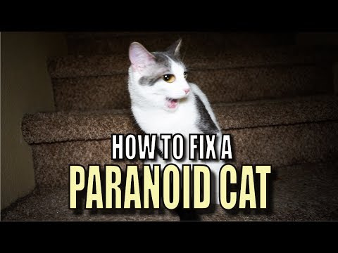 How To Fix A Paranoid Cat