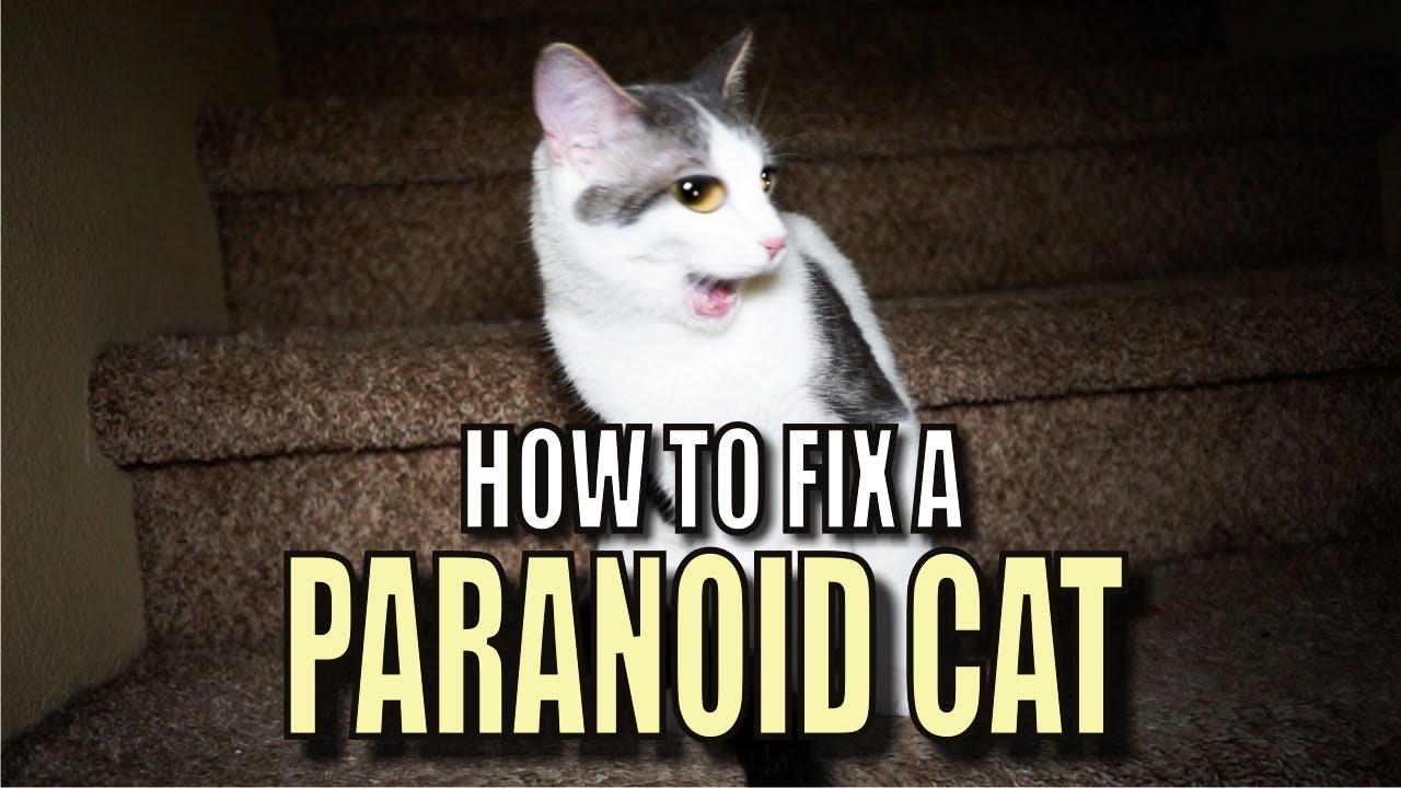 Dog Diary Vs Cat Diary Youtube